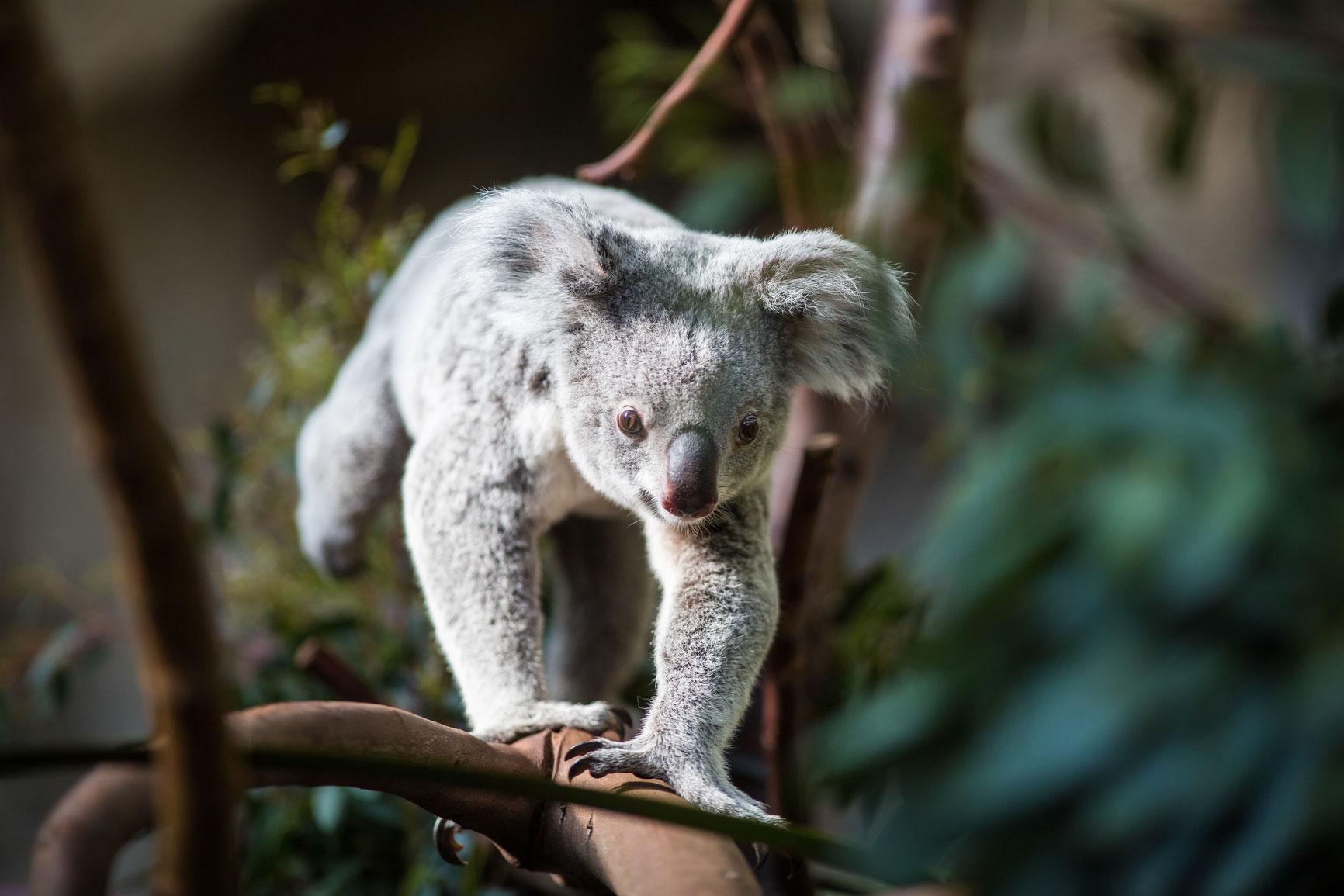 australia6