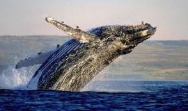 киты ЮАР