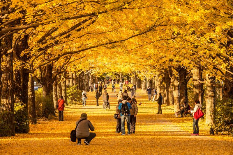 япония туры