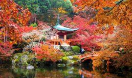 тур в японию в ноябре