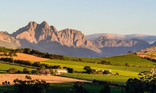 вина южной африки
